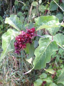 Native Plant 5