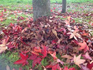 Leaf Potting Mix