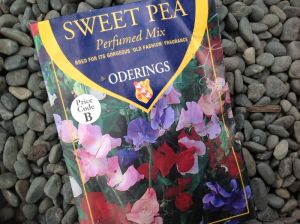 Sow sweetpea