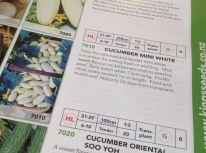 Cucumber Mini White