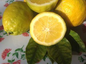 Lemons Close up