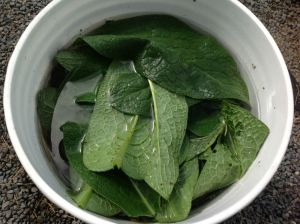 comfrey in water