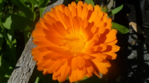 Close up Calendular
