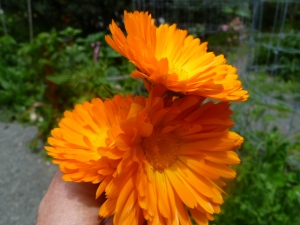 Just picked calendular