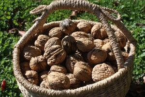 Walnuts 2